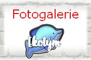 Ekotým - fotogalerie